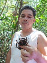 Antonio opowiada o wyciągniętej z norki niebezpiecznej tarantuli